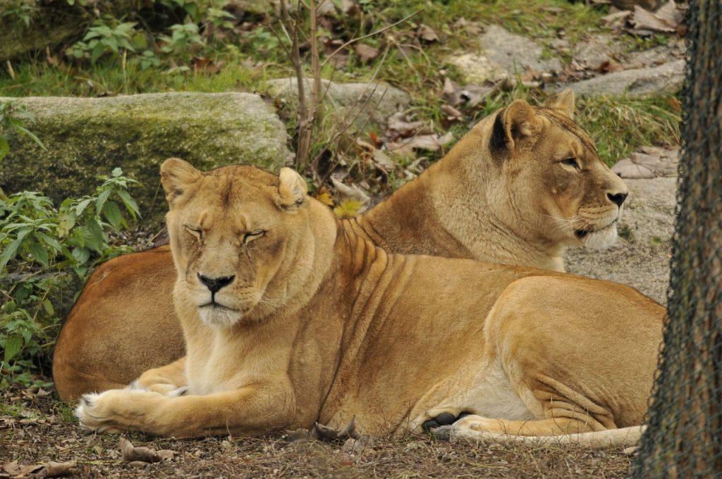 zoo di monaco di baviera
